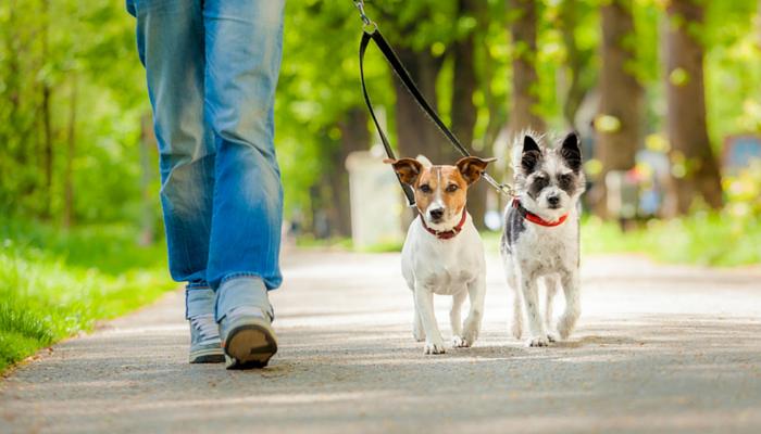 Професия разходка на кучета