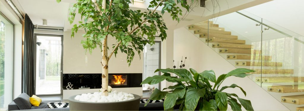 Най-доброто интериорно озеленяване за дома ви