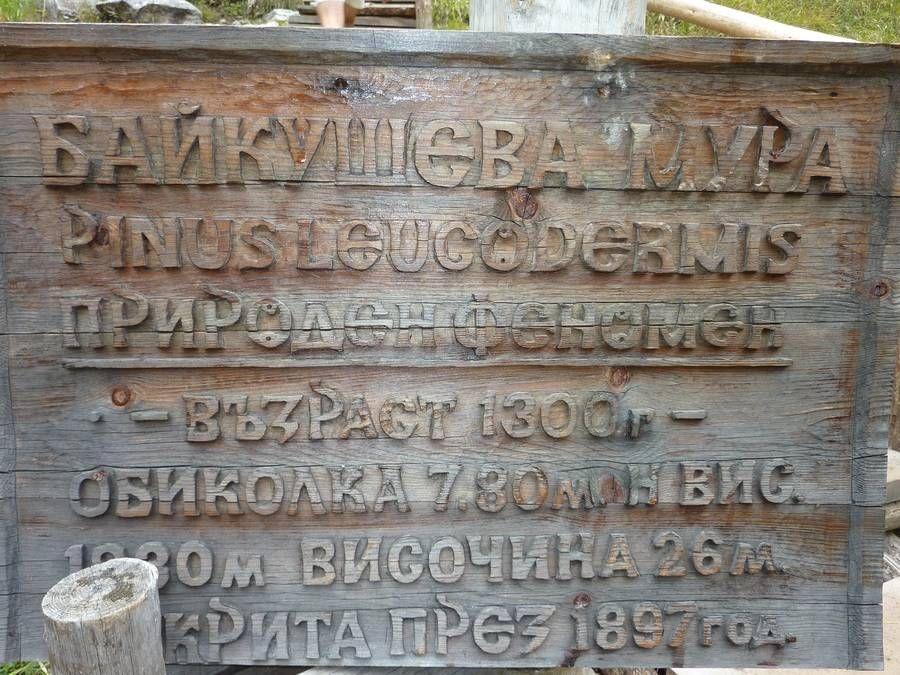 информация за Байкушевата мура