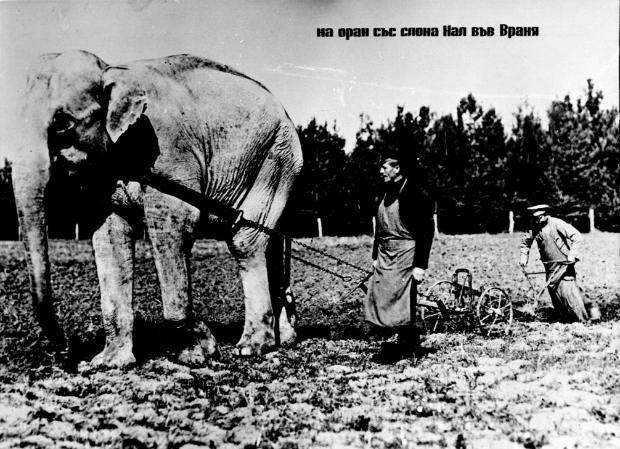 първия зоопарка в София