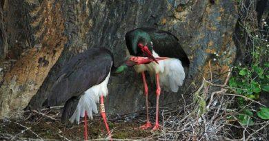Застрашени животни в България